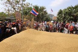 Sai lầm trong trợ giá gạo của Thái Lan
