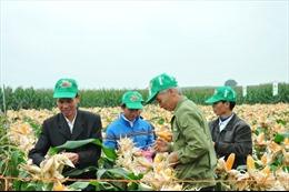 Chuyển giao tiến bộ kỹ thuật cho nông dân Nghệ An