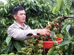 Xuất khẩu cà phê Việt Nam tiếp tục đạt đỉnh cao
