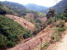 Rừng phòng hộ ở Tú Nang - Sơn La đang kiệt quệ
