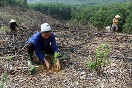 Bất cập trong giao đất, giao rừng - Bài cuối: Cần giải pháp sử dụng