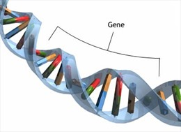 Phát hiện hơn 100 mã ADN đột biến gien gây tâm thần phân liệt
