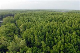 Gian nan giữ rừng ngập mặn