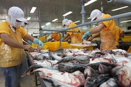 Tìm giải pháp nâng sức cạnh tranh cho cá tra Việt Nam tại thị trường châu Âu