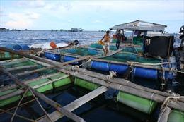Long Sơn tìm hướng bền vững nuôi cá lồng bè