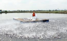 Nhiều cơ hội cho cá tra vào châu Âu