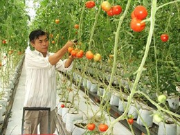 10 tỷ đồng với lãi suất 0% cho vay phát triển nông nghiệp