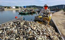 Trà Vinh: Nhất trí thành lập thị xã Duyên Hải