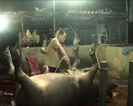 Xử phạt 3 lò giết mổ bơm nước vào gia súc