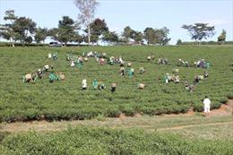 Bất cập trong đào tạo nghề cho nông thôn