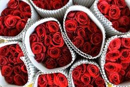 Hậu Valentine - cơ hội cho dịch vụ du lịch độc thân
