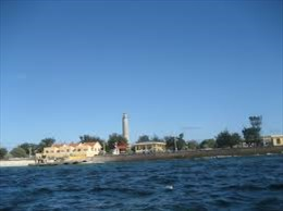 Vị sâm đất đảo Song Tử Tây