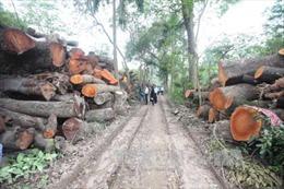 Bài học lớn từ dự án thay thế cây xanh Hà Nội và kè sông Đồng Nai