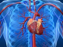 Tìm ra cách tái tạo mô tim đã chết