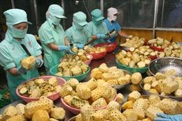 Đa dạng thị trường để gỡ khó cho xuất khẩu nông sản