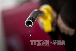 Giá vàng giảm, giá dầu biến động