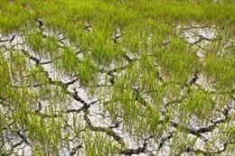 Đắk Lắk khô hạn khốc liệt nhất từ trước đến nay