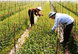 Hà Nội đầu tư nhiều hơn cho nông nghiệp
