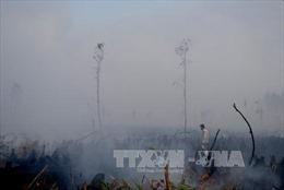Cháy rừng thông 10 năm tuổi tại Thanh Hóa
