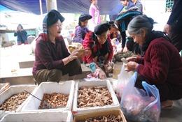 Trồng cây dược liệu  gắn với du lịch