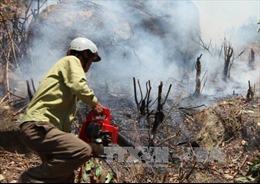 Đã khống chế đám cháy rừng thông tại Nghệ An
