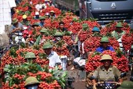 Không có chuyện vải thiều Bắc Giang 'dội chợ'