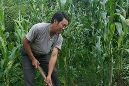 Trưởng bản người Mông học làm giàu từ báo 2472