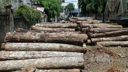 Bắt hai vụ vận chuyển gỗ lậu qua biên giới