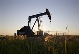 Giá dầu giảm, giá vàng tăng nhẹ