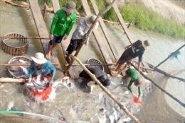 Liên kết sản xuất và tiêu thụ cá tra