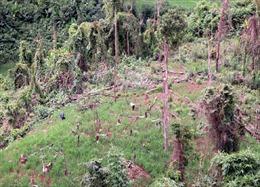 """""""Báo động đỏ"""" nạn phá rừng ở Điện Biên"""