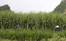 Sơn La loay hoay sắp xếp lại nông, lâm trường  - Bài 1: