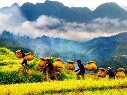 Thao thức mùa gặt