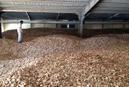 Từ ngày 5/9, dừng thu thuế xuất khẩu sắn lát 5%