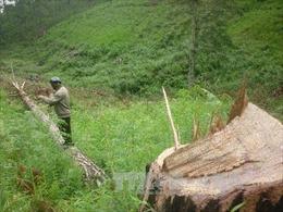 """Cần xác minh rõ thông tin """"9.000 ha rừng đầu nguồn tan hoang"""""""