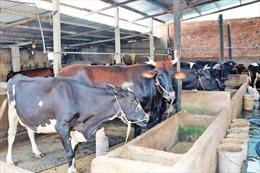 Tăng mức cho vay hộ nông dân không có tài sản bảo đảm