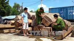 Khởi tố 6 đối tượng làm giả hồ sơ vận chuyển gỗ lậu