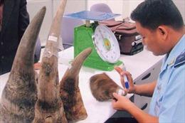 Sừng nhân tạo không giúp ngăn chặn nạn thảm sát tê giác
