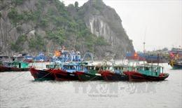 Cảng vụ Quảng Ninh không thu tiền duy trì GPS