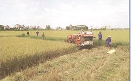 Dồn điền đổi thửa ở Nam Định