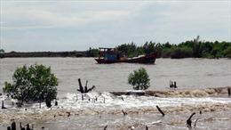 Trồng rừng ngập mặn ngăn xói lở đê biển