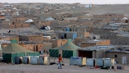 Hơn 60 người thương vong do cháy trại tị nạn Algeria