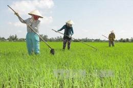 Dồn sức nâng chất lượng nông nghiệp Đồng bằng sông Cửu Long