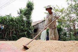 Nâng cao giá trị hạt gạo