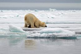 Mức tăng nhiệt độ Trái Đất có thể chỉ giữ ở mức 1,5 độ C