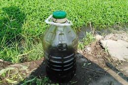Bắt quả tang dùng nhớt thải để kích thích tăng trưởng rau muống