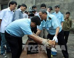 Thu giữ hơn 180 kg ngà voi tại Nội Bài