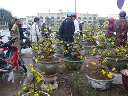 Quảng Bình tràn ngập sắc hoa