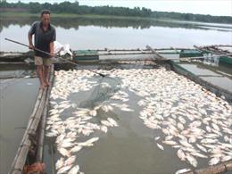 Cá chết hàng loạt ở An Giang do thiếu oxi