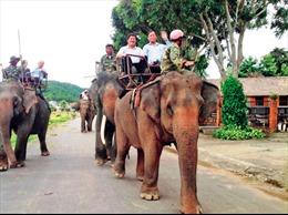 Đắk Lắk dần chuyển đổi sang du lịch thân thiện với voi
